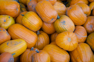 jessica greene | rawr Lots of pumpkins start piling up outside of local grocery stores once fall season hits. Pumpkins are a common ingredient used this time of year in everything from desserts to drinks.