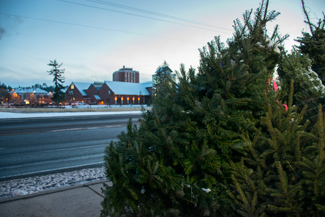 St. Mary's School Annual Christmas Tree Sale on the corner of Line St and Pullman Rd.