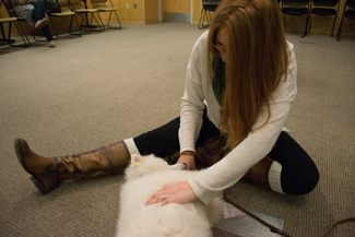 Brenda Ely | Argonaut Brittany Norberg pets Klondike, an American Eskimo cat from the Humane Society, in the Commons Wednesday.