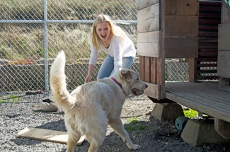 Nathan Romans   Argonaut  Volunteer Jamie Locker plays in a kennel with a husky Australian shepherd mix named Ginger at the Humane Society of the Palouse Saturday.